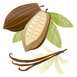 Cacao beans illustration Royalty Free Stock Images