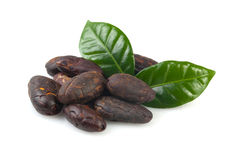 Cacao beans isolated on white. Stock Images
