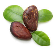 Cacao beans isolated. On white background stock photos