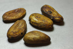 Cacao beans macro Royalty Free Stock Photos