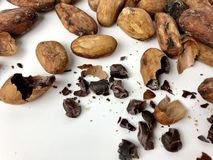 Cacao beans and nibs. On a white background royalty free stock image