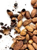 Cacao beans and nibs. On a white background stock photos