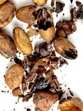 Cacao beans and nibs. On a white background stock images
