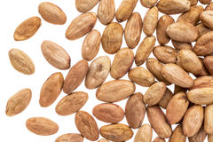 Cacao beans on white background Royalty Free Stock Photo