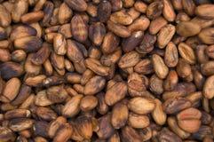 Cacao Beens immagini stock libere da diritti