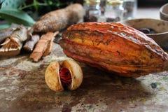 Cacao bij het Eiland Grenada Stock Fotografie