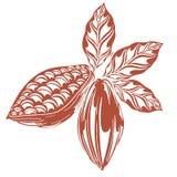 Cacao del logotipo Imagen de archivo libre de regalías