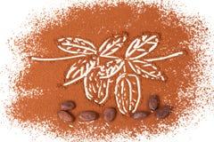 Cacao fasole zdjęcie royalty free
