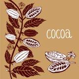 Cacao fasoli roślina, Wektorowe egzotyczne cacao rośliny Obrazy Royalty Free