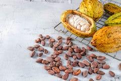 Cacao fresco con las vainas del cacao y los granos de cacao foto de archivo libre de regalías