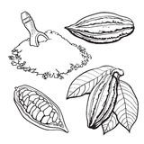 Cacao fruit, beans and powder, set of style vector illustrations Royalty Free Stock Images
