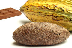 Cacao fruit, chocolate and cocoa bread Royalty Free Stock Image