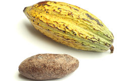 Cacao fruit and cocoa bread Royalty Free Stock Images