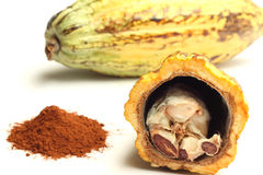 Cacao fruit and cocoa powder. Opened cacao fruit and cocoa powder isolated on white Stock Photography