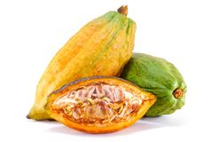 Cacao fruit isolated on white royalty free stock photos