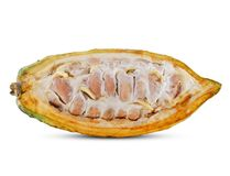 Cacao fruit isolated on white stock images