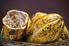 Cacao fruit, raw cacao beans Stock Photography