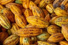 Cacao fruit, raw cacao beans ,Cocoa pod background. Cacao fruit, raw cacao beans and Cocoa pod background royalty free stock photos