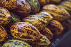 Cacao fruit, raw cacao beans. Cocoa pod Royalty Free Stock Photo