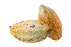 Cacao fruit, raw cacao beans, Cocoa pod on white background. Royalty Free Stock Image