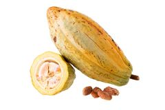 Cacao fruit, raw cacao beans, Cocoa pod on white background. Cacao fruit, raw cacao beans, Cocoa pod on white background Stock Images