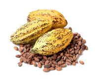 Cacao fruit, raw cacao beans, Cocoa pod on white background. Cacao fruit, raw cacao beans, Cocoa pod on white background Royalty Free Stock Photo