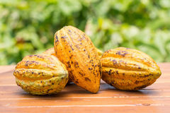 Cacao fruit, raw cacao beans, Cocoa pod on wooden background. Cacao fruit, raw cacao beans, Cocoa pod on wooden background Stock Photo