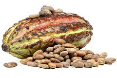 Cacao fruit. With roasted cacao beans isolated on white background Royalty Free Stock Image