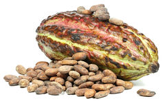 Cacao fruit. With roasted cacao beans isolated on white background Royalty Free Stock Photos
