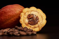 Cacao fruit theme. Macro of cocoa seeds and fruit on dark wooden background Royalty Free Stock Photography