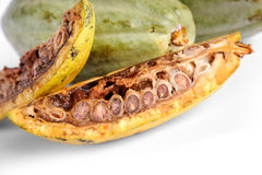 Cacao fruits royalty free stock photo