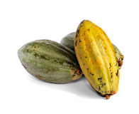 Cacao fruits. Isolated against white background stock images