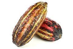 Cacao fruits Royalty Free Stock Photo