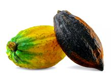 Cacao fruits isolated on white background royalty free stock photos