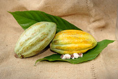 Cacao fruits with leaf Royalty Free Stock Image