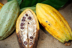Cacao fruits with leaf Royalty Free Stock Photos