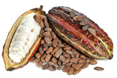 Cacao fruits. With roasted cacao beans isolated on white background Stock Photos