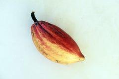 Cacao, grondstof voor de vervaardiging van chocolade Royalty-vrije Stock Foto's