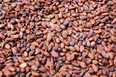 Cacao-haricots Image libre de droits