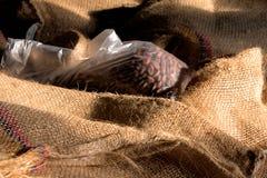 Cacao-haricots Photo libre de droits