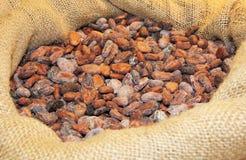 Cacao ia een zak Stock Foto