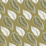 Cacao leaves background pattern Stock Photos
