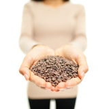 Cacao nibs from cocoa beans Royalty Free Stock Photography