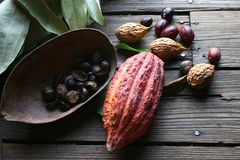 Cacao and nutmegg (Grenada) Royalty Free Stock Photography