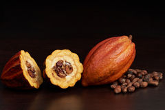 Cacao open pod. With dry cocoa beans on dark wooden background Royalty Free Stock Image
