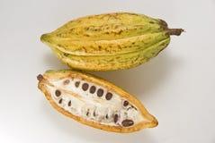 cacao owoców Zdjęcie Stock