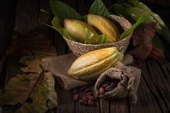 Cacao owoc, surowe cacao fasole, Kakaowy strąk na drewnianym tle Fotografia Stock