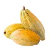 Cacao owoc, surowe cacao fasole, Kakaowy strąk na drewnianym tle Zdjęcia Royalty Free