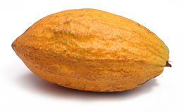 Cacao pod Stock Image