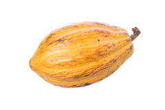 Cacao pod on white. Large ripe Theobroma cacao pod isolated on white background royalty free stock images